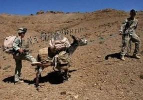 أفغانستان: تفجير انتحاري بواسطة حمار