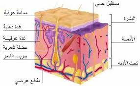 كنوز من علاجات الأمــــراض الجلدية