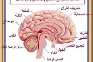 مخ الحوثي