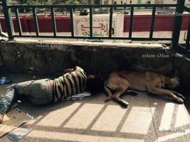 ارفع راسك فوق انت . .  طفل ينام بجوار كلب علي كوبري الخشب بمنطقة بولاق الدكرور