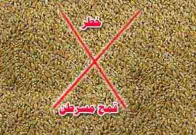 مصر تستورد قمحًا فرنسيًّا مسرطنًا