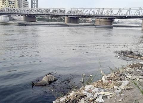 تلوث نهر النيل