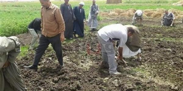 """حكومة الانقلاب تدمر 3 مشاتل أرز بـ""""مشتهر"""" بالقليوبية"""