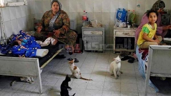 بؤس وسوء الرعاية الصحية والمعيشية في مصر