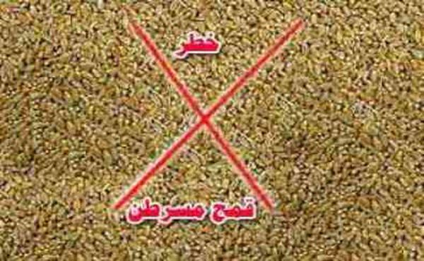 """زراعة الانقلاب تستورد أكبر شحنة """"قمح مسرطن"""" للمصريين"""