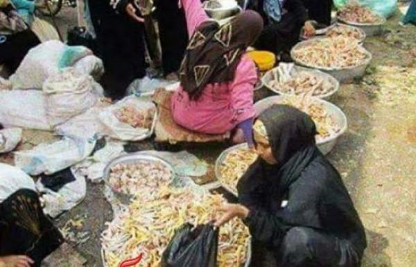 من المصريين يلجأون لـ هياكل الدواجن