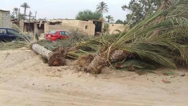 """لدواع أمنية العسكر يبُيد أشجار النخيل والزيتون """"الإرهابية"""" من سيناء"""