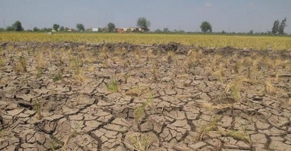 الزراعة تدخل في نفق مظلم على أيدي العسكر