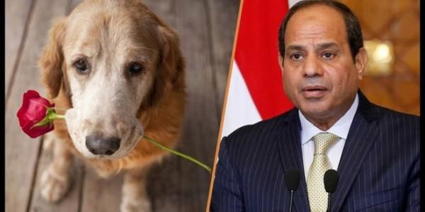 السيسي وكلب