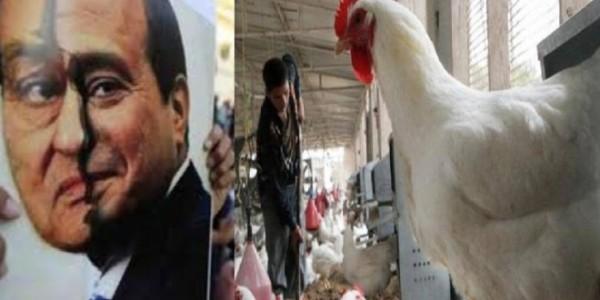 إنفلونزا الطيور.. السيسي يحاول التغطية على فشله بأمراض مبارك