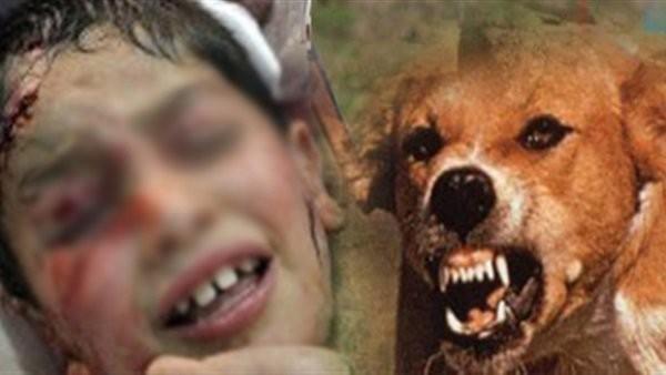 """مصر الأولى عالميًا في """"عقر الكلاب"""""""