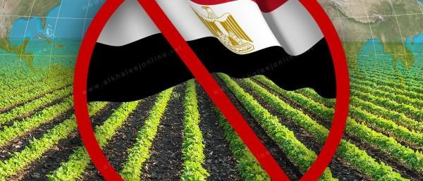 حظر استيراد منتجات مصر الزراعية يُصيب اقتصادها في مقتل