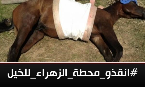 #انقذو_محطه_الزهراء_للخيل يكشف إهمال الانقلاب المتعمد لصالح الإمارات